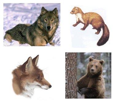 Як звяры хвасты атрымалі