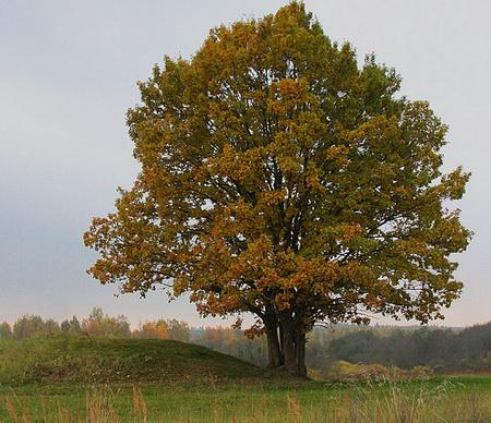 Стихи про лес на белорусском языке