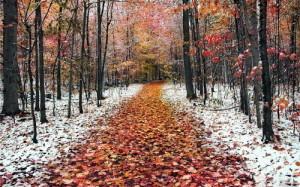 мяжа восени